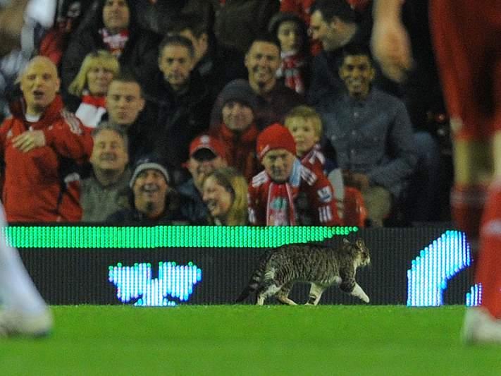 Houve gato no Liverpool-Tottenham