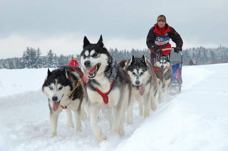 Mushing integrado na Federação de Desportos de Inverno