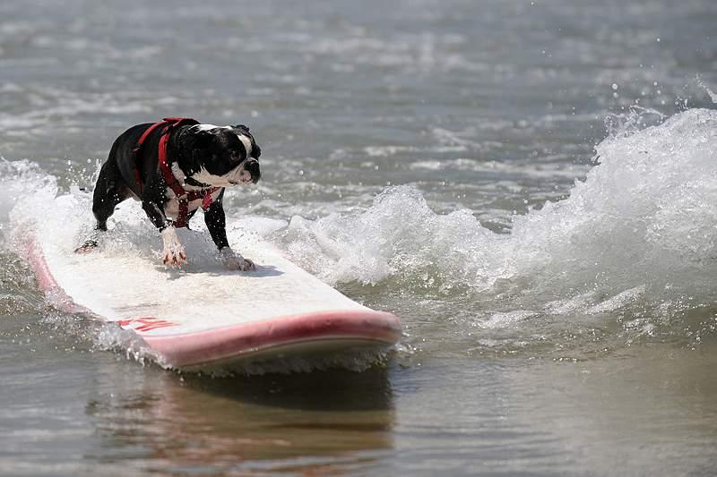 Ericeira acolhe primeiro campeonato nacional de surf para cães