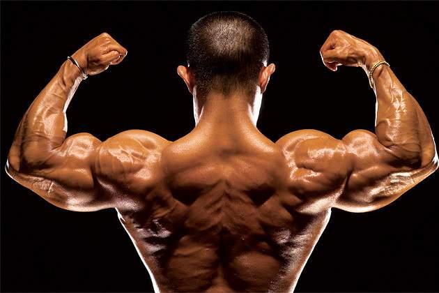 Músculos, fitness, culturismo