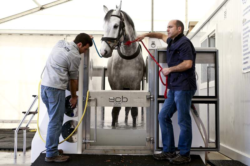 Spa de água salgada alivia esforços de cavalos em concurso