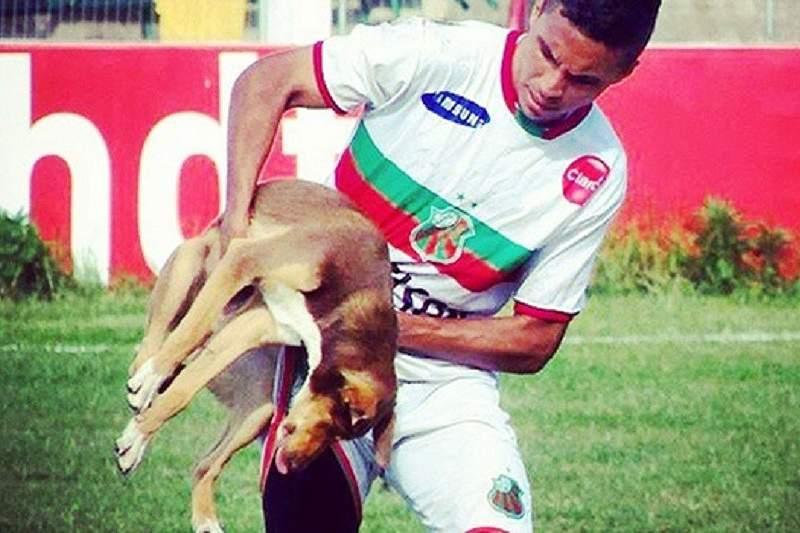 Cão de Dudu