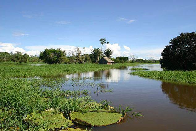 Perdidos na Amazónia