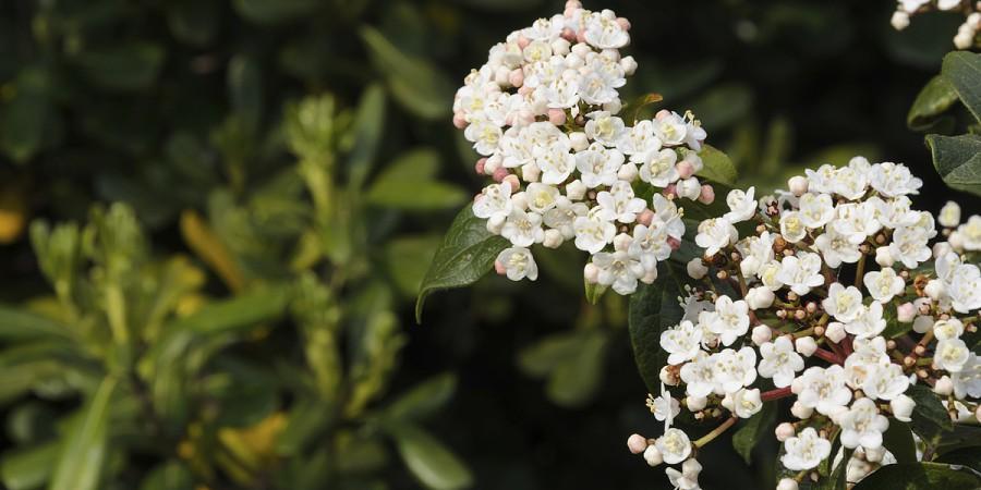 7 arbustos para zonas sombrias sapo lifestyle - Especies de arbustos ...