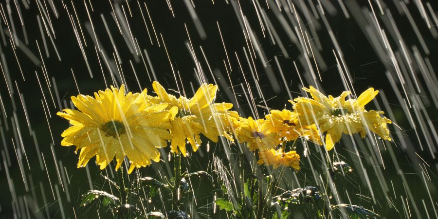 Resultado de imagem para flores depois da chuva