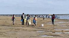 Voluntários retiram 1.500 embalagens de sal e 900 quilos de lixo do estuário do Sado