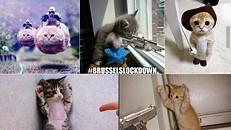 Belgas respondem ao terrorismo com gatos nas redes sociais