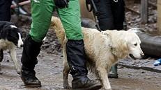 Duas pessoas detidas por maus-tratos a animais