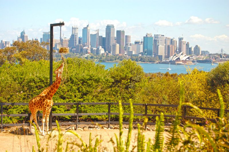 Vista de Sydney do Taronga Zoo. Foto: Volto Já
