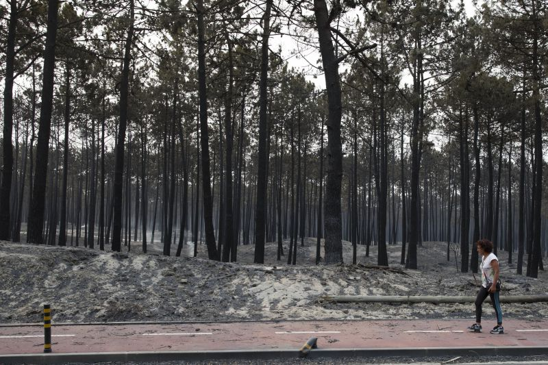 epa06269278 A woman walks aside a forest destroyed by a wildfire in Vieira de Leiria, Marinha Grande, Center of Portugal, 16 October 2017. 6,000 firemen supported by 1,800 land vehicules are fighting several wildfires all over the country.  EPA/PAULO CUNHA