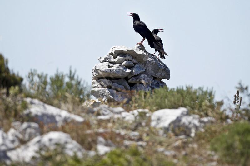 Resultado de imagem para Portugal desperdiça fundos europeus para conservação da natureza, dizem ambientalistas