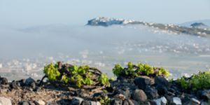Santorini Wine Tour