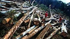 Amazónia: desflorestação aumentou 16% em relação a 2014