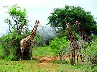 Governo quer investimentos  nas áreas de conservação