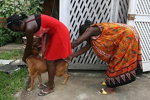 Donos de animais de estimação são chamados a vaciná-los demonstrando assim o quanto os amam