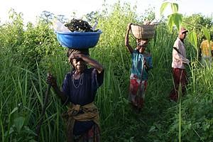 Camponeses são chamados a comparticipar na preparação das terras