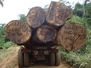 O parque florestal do Kwanza-Norte oferece algumas das variedades de madeiras mais preciosas do mundo