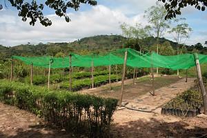 Viveiro de plantas em Cazengo para preservação e multiplicação das espécies