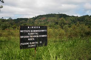 Autoridades querem proteger a todo o custo o Polígono Florestal do Cazengo
