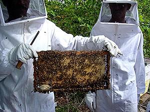 No quadro do programa de fomento apicultores receberam vestuário apropriado para lidar com as abelhas