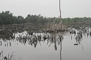 A situação no mangal da foz do rio Chiloango exige medidas cautelares para evitar uma catástrofe ecológica na região