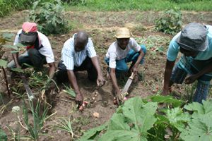 Existem políticas institucionais de fomento da agricultura para a auto-suficiência alimentar em Angola