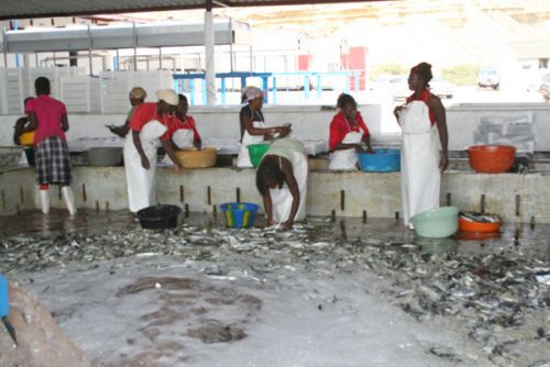 Fábrica de farinha de peixe para ração animal e fertilizantes para agricultura vai produzir ainda óleo destinado à indústria farmacêutica
