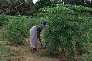Camponeses vão ser apoiados com sementes e instrumentos de trabalho para poderem aumentar a produção nas comunidades
