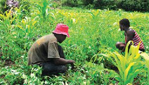 O apoio permanente das autoridades administrativas aos camponeses tem ajudado a manter activa a actividade agrícola