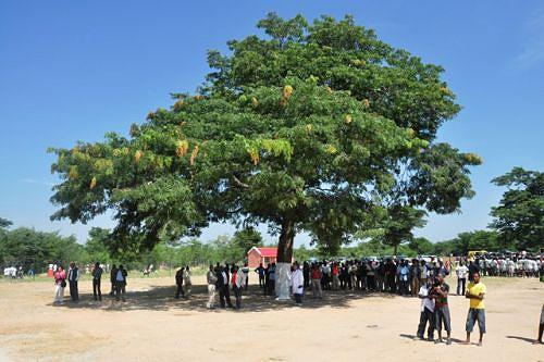 Muitos técnicos da província aprenderam a ler e a escrever debaixo desta árvore