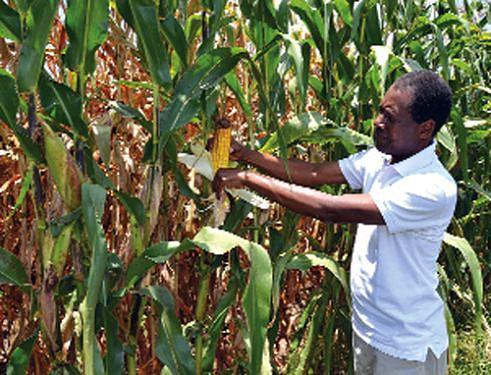 Fazenda Pungo Andongo tem previsto o cultivo de 3.000 hectares de milho