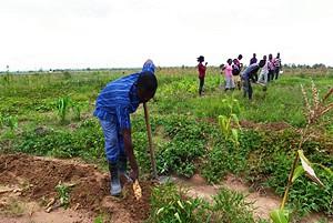 Mais de 50 agricultores produzem essencialmente frutas e usam fertilizantes vegetais ocupando um espaço actual de 118 hectares