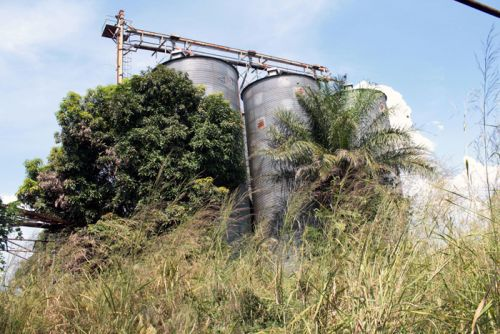 Antiga fábrica de descasque de arroz do Nordeste paralisada há alguns anos