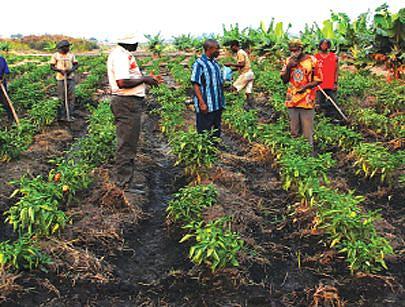 Camponeses recebem créditos e apoio técnico para melhorar a produtividade
