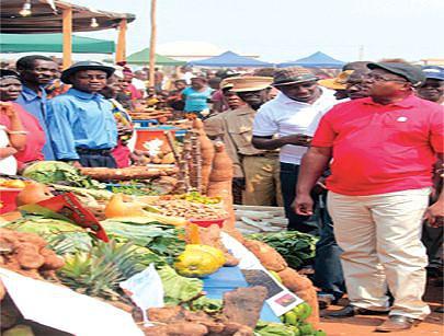 Os incentivos financeiros aos agricultores estão a permitir o aumento da produção