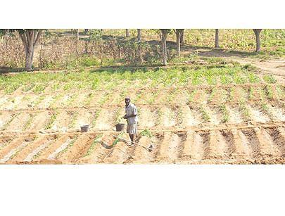A agricultura representa o terceiro item de maior peso na balança económica da província e a aposta é melhorar cada vez mais os resultados com a introdução de novas técnicas