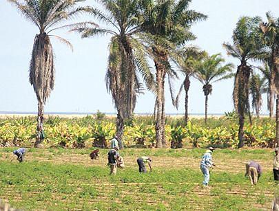 População prisional dá um valioso contributo à produção agrícola das fazendas dos Serviços Prisionais no Namibe