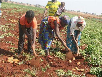 O sector da agricultura está também contemplado num dos prémios Sirus porque a capacidade da mulher em produzir é infinita