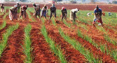 Os camponeses da região têm recebido vários apoios para poderem aumentar a produção