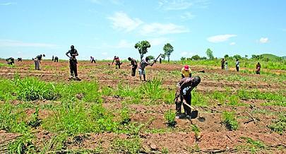 Até ao primeiro trimestre do próximo ano os agricultores da Quibala vão colocar no mercado grandes quantidades de bens alimentares