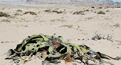 A realização do Rally Dakar Angola divulga o crescimento turístico e a imagem do Namibe