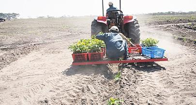 Empresa Nacional de Mecanização Agrícola garante a preparação de milhares de hectares de terras aráveis para o aumento da produção