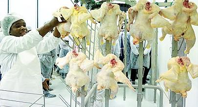 Cuanza Norte investe na produção de carne