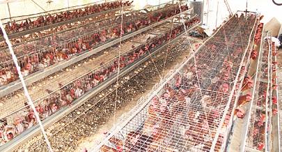 O projecto avícola que é inaugurado em breve e onde vão ser criadas milhares de galinhas já tem as fábricas de ração e as naves concluídas