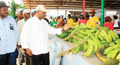 Afeira da banana que termina hoje no Panguila mobilizou centenas de produtores e consumidores de várias  províncias