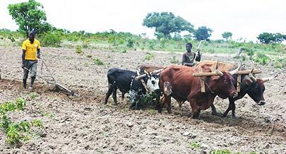 Camponeses têm meios para trabalhar