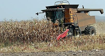Processo de colheita de milho na fazenda Santo António feita com equipamentos modernos