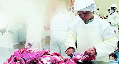 Cooperativa de criadores de gado da região Sul está empenhada em reduzir o actual défice de carne em todo o território