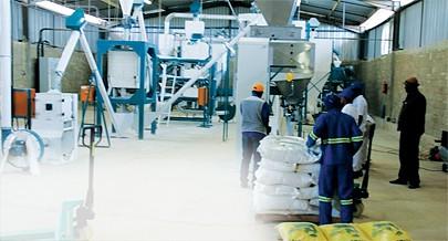 Fábrica de transformação de grande capacidade garante mercado para as famílias produtoras de milho no norte da Huíla