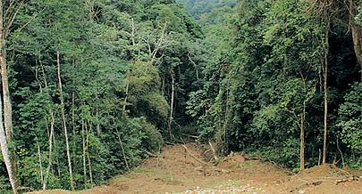 O desmatamento da floresta é feito desde o tempo colonial por agricultores itinerantes